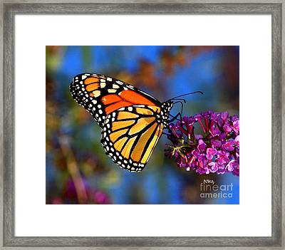 Sipping Monarch Framed Print