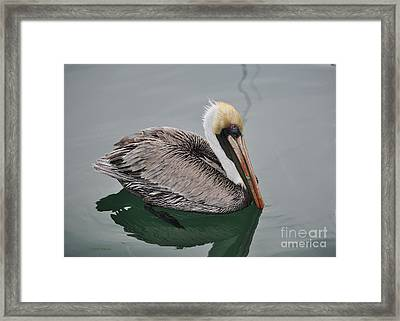 Sipping Seas Framed Print