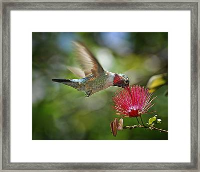 Sipping The Nectar Framed Print