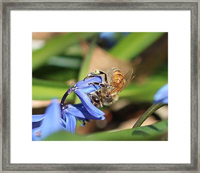Sipping Upside-down Framed Print
