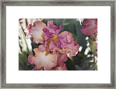 Sirina Framed Print by Joan Carroll