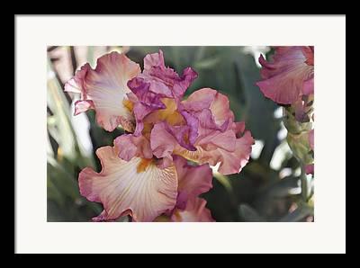 Denver Botanical Garden Framed Prints