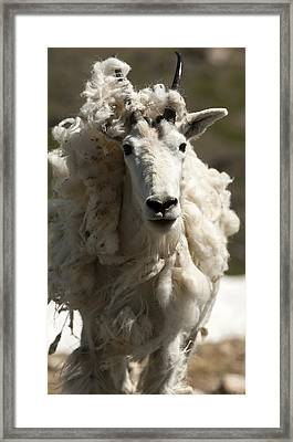Sister Dreads Framed Print by Amy Gerber