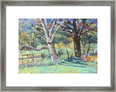 Sister Trees Framed Print