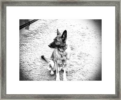 Sit Pretty Framed Print by Chasity Johnson