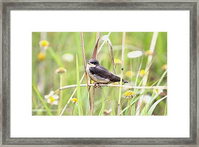 Framed Print featuring the photograph Sitin' Pretty by Elizabeth Winter