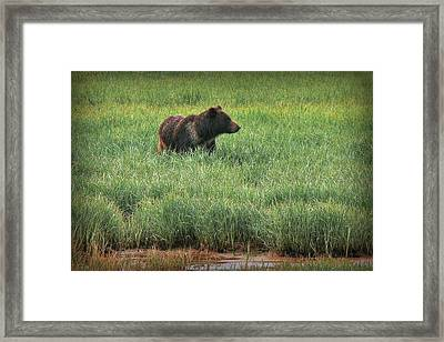 Sitka Grizzly Framed Print