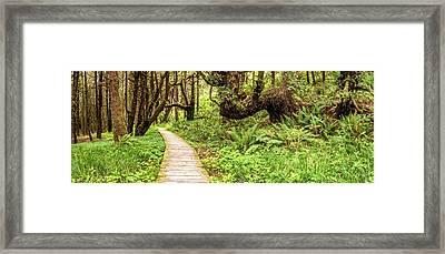 Sitka Spruce Trees And Boardwalk Framed Print