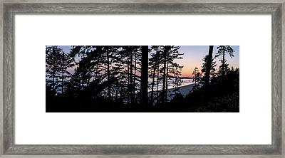 Sitka Spruce Trees On Long Beach Framed Print