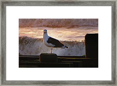 Sittin On The Dock Of The Bay Framed Print by David Dehner
