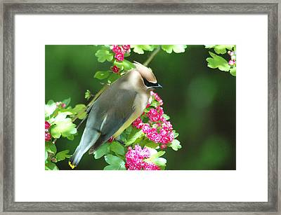 Sittin' Pretty Framed Print by Annie Pflueger