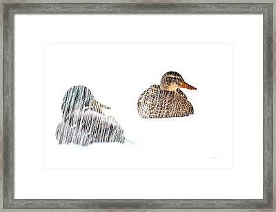 Sitting Ducks In A Blizzard Framed Print