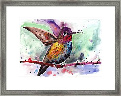 Sitting Hummingbird Watercolor Framed Print by Tiberiu Soos
