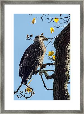 Sitting In The Sun Framed Print