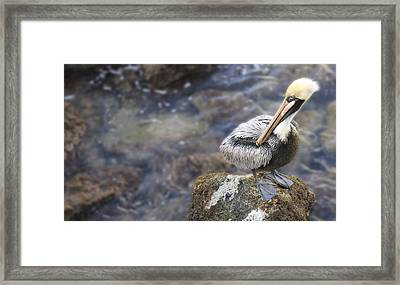 Sitting On A Rock In The Bay Framed Print