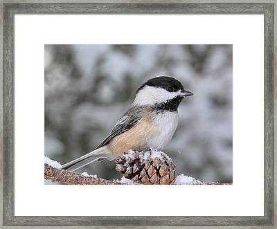 Sitting On A Snow Cone Framed Print