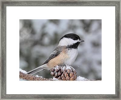 Sitting On A Snow Cone Framed Print