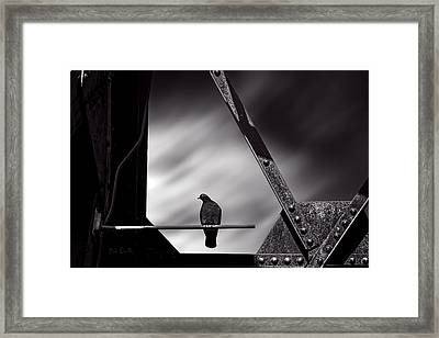 Sitting On A Stick Framed Print by Bob Orsillo