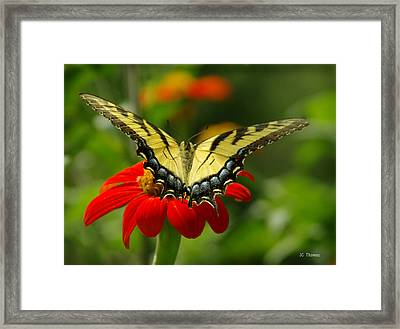 Sitting On Red Framed Print