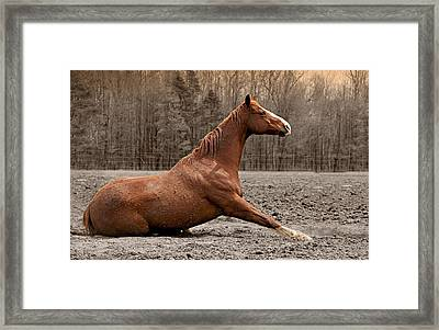 Sitting Pretty Framed Print by Carey Dils