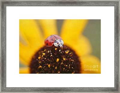 Sitting Pretty Framed Print by Darren Fisher