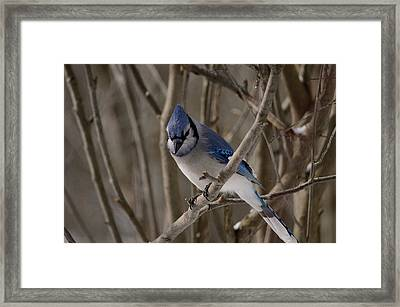 Framed Print featuring the photograph Sitting Pretty by David Porteus
