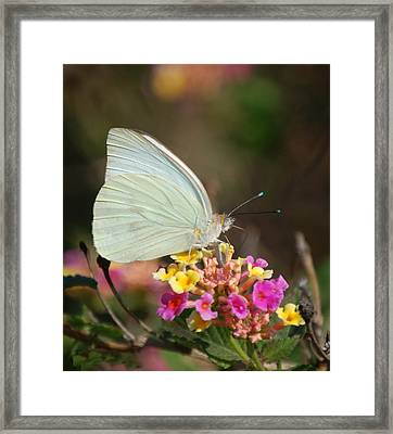 Sitting Pretty Framed Print by Leticia Latocki