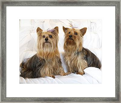 Sitting Pretty Framed Print