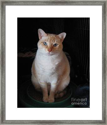 Framed Print featuring the photograph Sitting Pretty by Wendy Coulson