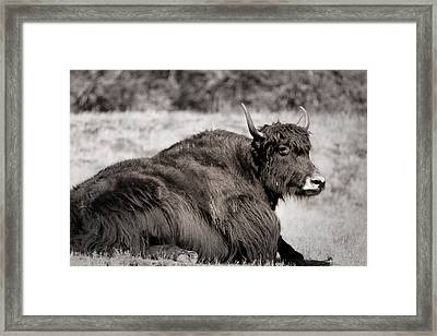 Sitting Strong Framed Print by Melanie Lankford Photography