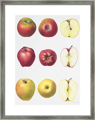 Six Apples Framed Print by Margaret Ann Eden