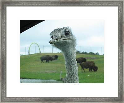 Six Flags Great Adventure - Animal Park - 121210 Framed Print by DC Photographer
