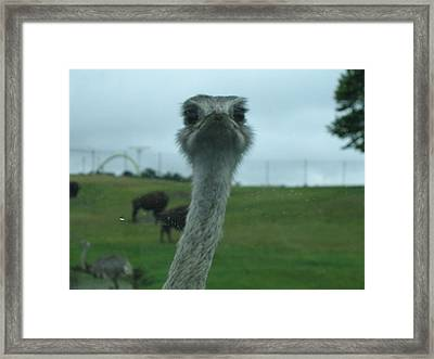 Six Flags Great Adventure - Animal Park - 121211 Framed Print by DC Photographer