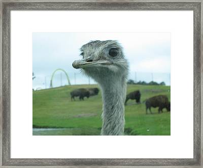 Six Flags Great Adventure - Animal Park - 121212 Framed Print