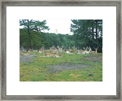 Six Flags Great Adventure - Animal Park - 121216 Framed Print by DC Photographer