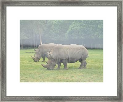 Six Flags Great Adventure - Animal Park - 121219 Framed Print