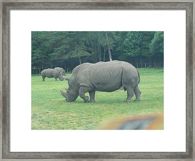 Six Flags Great Adventure - Animal Park - 121220 Framed Print by DC Photographer