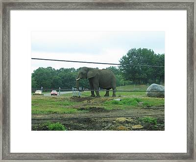 Six Flags Great Adventure - Animal Park - 121223 Framed Print by DC Photographer