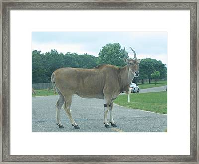 Six Flags Great Adventure - Animal Park - 121232 Framed Print by DC Photographer