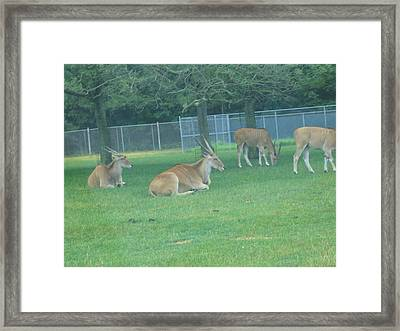 Six Flags Great Adventure - Animal Park - 121234 Framed Print by DC Photographer