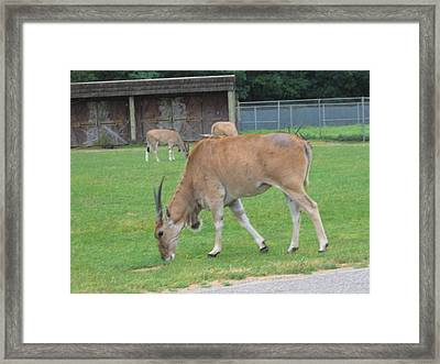 Six Flags Great Adventure - Animal Park - 121235 Framed Print by DC Photographer