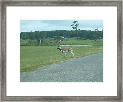 Six Flags Great Adventure - Animal Park - 121238 Framed Print by DC Photographer