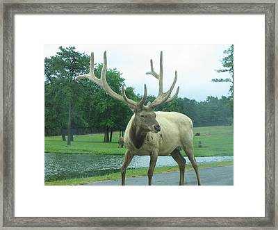 Six Flags Great Adventure - Animal Park - 12124 Framed Print by DC Photographer