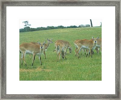 Six Flags Great Adventure - Animal Park - 121242 Framed Print by DC Photographer