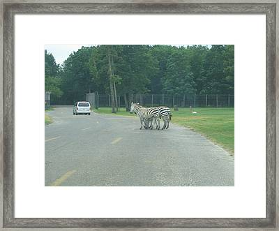 Six Flags Great Adventure - Animal Park - 121248 Framed Print by DC Photographer