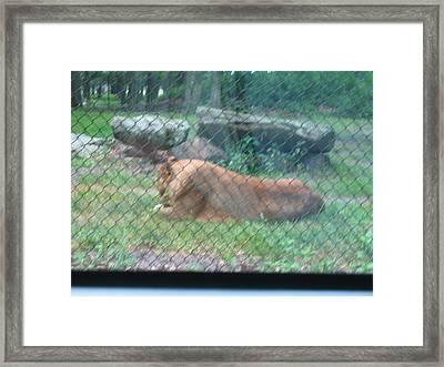 Six Flags Great Adventure - Animal Park - 121251 Framed Print