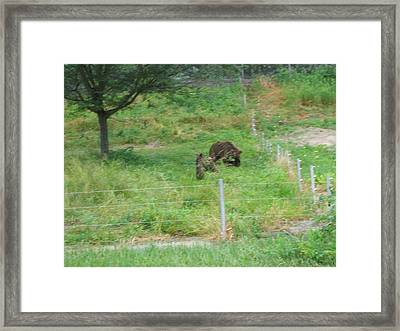 Six Flags Great Adventure - Animal Park - 121262 Framed Print by DC Photographer