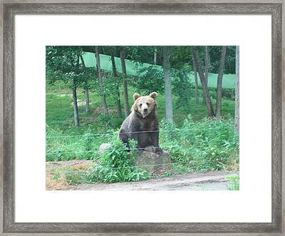Six Flags Great Adventure - Animal Park - 121263 Framed Print by DC Photographer