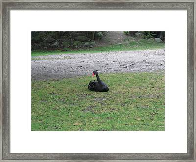 Six Flags Great Adventure - Animal Park - 121269 Framed Print by DC Photographer