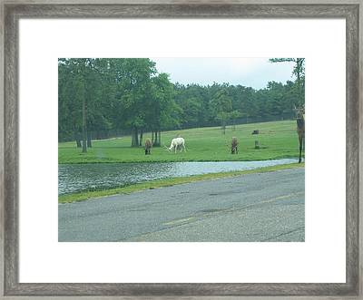 Six Flags Great Adventure - Animal Park - 12127 Framed Print by DC Photographer